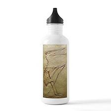 Pterosaur fossil Water Bottle