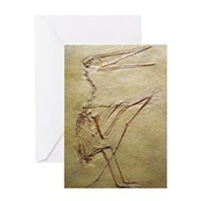 Pterosaur fossil Greeting Card