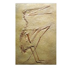 Pterosaur fossil Postcards (Package of 8)