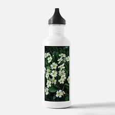 Primrose (Primula sp.) Water Bottle