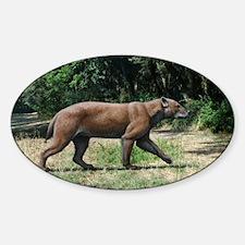 Prehistoric dog-bear, artwork Decal