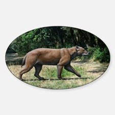 Prehistoric dog-bear, artwork Sticker (Oval)