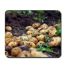 Potato harvest Mousepad