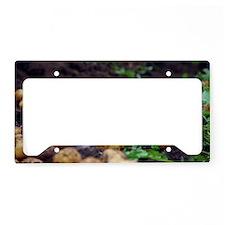 Potato harvest License Plate Holder