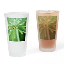 Conifer leaves Drinking Glass