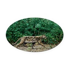 Prehistoric cat, artwork Oval Car Magnet