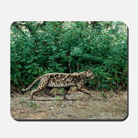 Prehistoric cat, artwork Mousepad