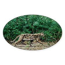 Prehistoric cat, artwork Decal
