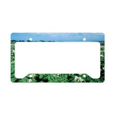 Potato field License Plate Holder