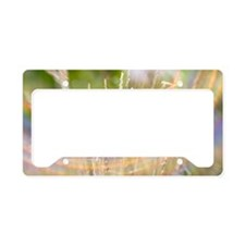 Summer grass and rainbow License Plate Holder
