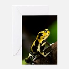 Poison arrow frog Greeting Card