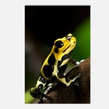 Poison arrow frog Postcards (Package of 8)