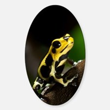 Poison arrow frog Decal
