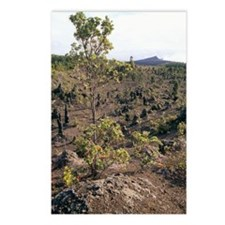 Plant regrowth on a lava  Postcards (Package of 8)