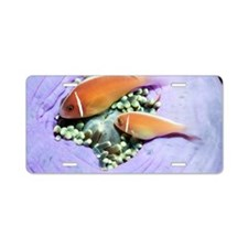 Pink anemonefish sheltering Aluminum License Plate