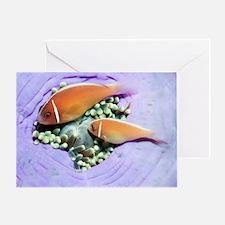 Pink anemonefish sheltering Greeting Card