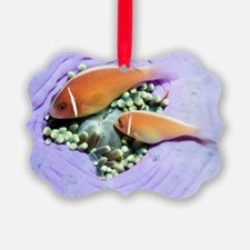 Pink anemonefish sheltering Ornament