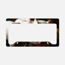 Piglets License Plate Holder