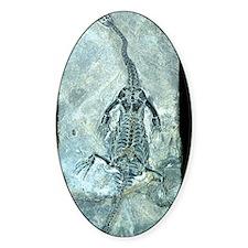 Plesiosaur fossil Decal