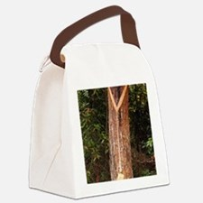 Pine resin collection Canvas Lunch Bag