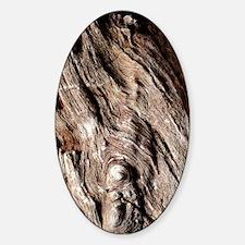 Petrified wood Decal
