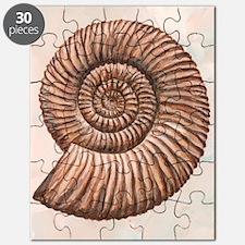 Perisphinctes ammonite, artwork Puzzle