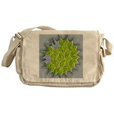 Pediastrum green algae, light microg Messenger Bag