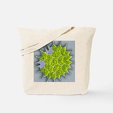 Pediastrum green algae, light micrograph Tote Bag