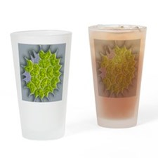 Pediastrum green algae, light micro Drinking Glass