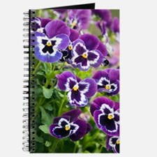 Pansy (Viola x wittrockiana) Journal