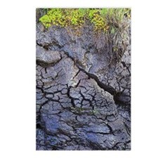 Peat bog Postcards (Package of 8)