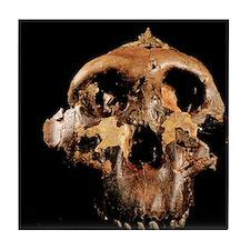 Paranthropus boisei skull Tile Coaster