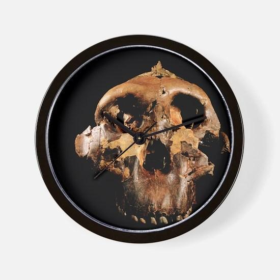 Paranthropus boisei skull Wall Clock
