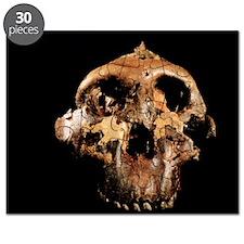 Paranthropus boisei skull Puzzle