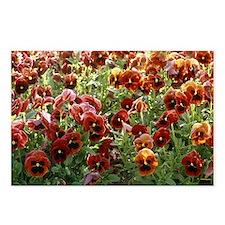 Pansies (Viola sp,) Postcards (Package of 8)