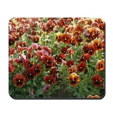 Pansies (Viola sp,) Mousepad