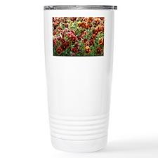 Pansies (Viola sp,) Travel Mug