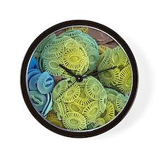 Calcareous phytoplankton, SEM Wall Clock