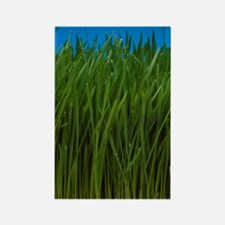 Organically grown wheat grass, Tr Rectangle Magnet