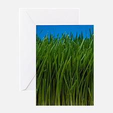 Organically grown wheat grass, Triti Greeting Card