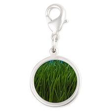 Organically grown wheat grass, Silver Round Charm