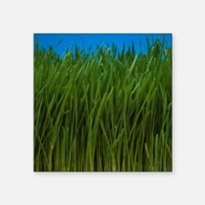 "Organically grown wheat gra Square Sticker 3"" x 3"""