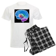 Brain anatomy, artwork Pajamas