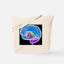Brain anatomy, artwork Tote Bag