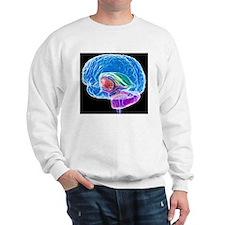 Brain anatomy, artwork Sweatshirt