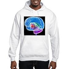Brain anatomy, artwork Hoodie