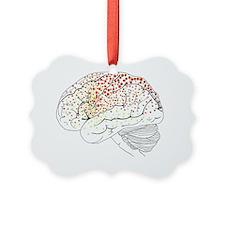 Brain anatomy, artwork Ornament