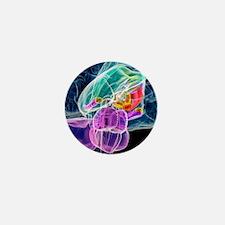 Brain anatomy, artwork Mini Button