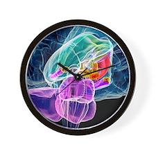 Brain anatomy, artwork Wall Clock