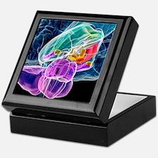 Brain anatomy, artwork Keepsake Box